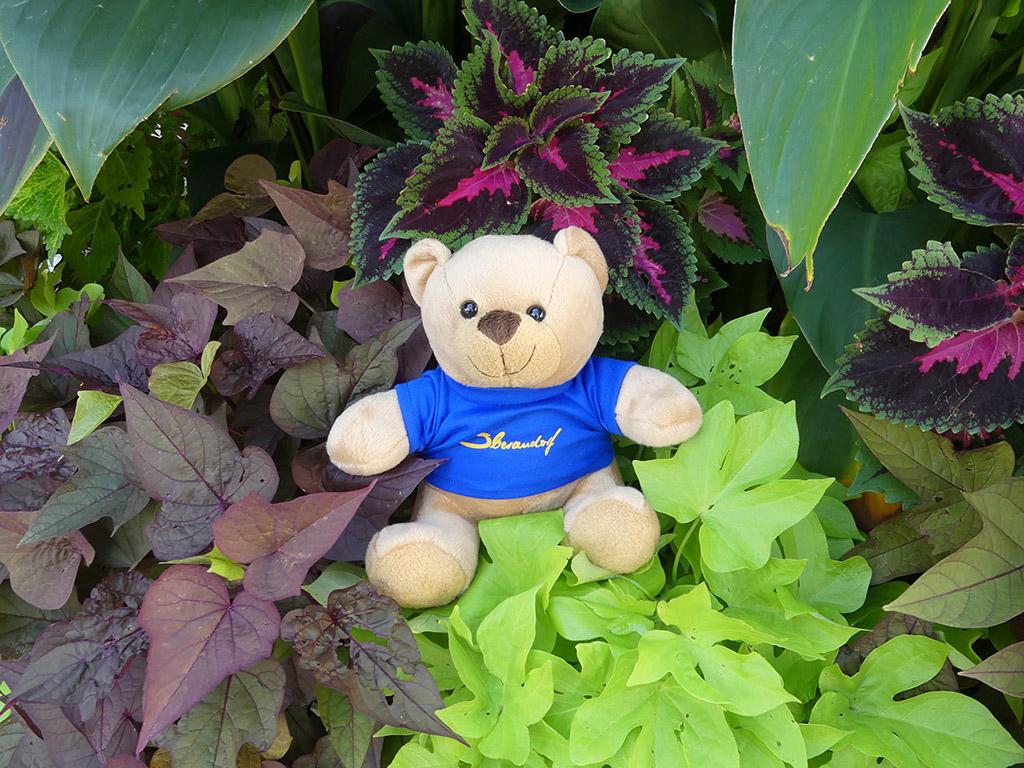 Souvenir Teddybär