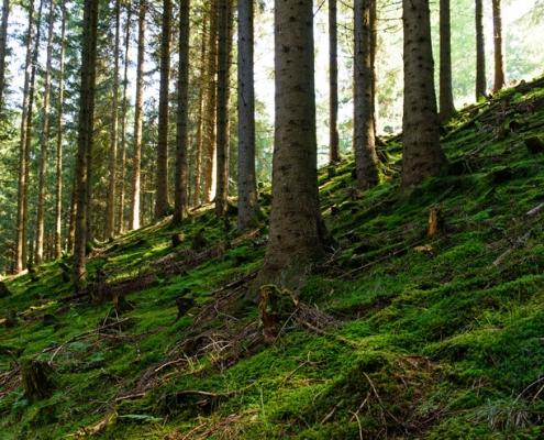 Tourist-Information Oberaudorf. Waldbaden Foto Hans Osterauer